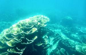 Tauchen am Ningaloo-Reef
